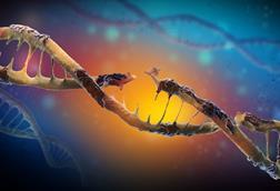 Single-strand damage in DNA