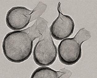 nano flasks