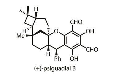 1116CW - Organic Matter - (+)-Psiguadial B