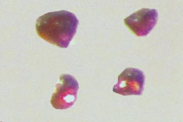 First intermetallic platinum salt thumbnail