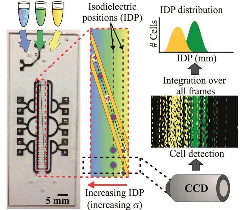 detecting sepsis with electrochemical monitoring